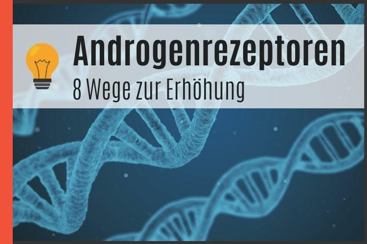 8 Wege die Androgenrezeptoren zu erhöhen