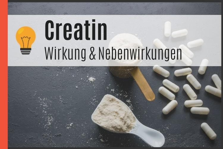 Creatin - Wirkung und Nebenwirkungen von Kreatin