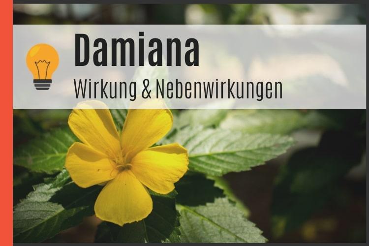 Damiana - Wirkung und Nebenwirkungen