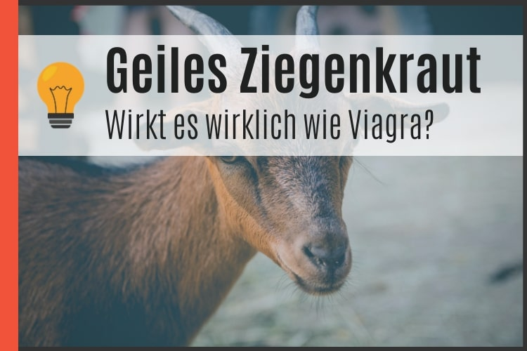Geiles Ziegenkraut   Wirkt es wirklich wie Viagra? [2020