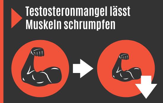 Testosteronmal verringert Muskelmasse