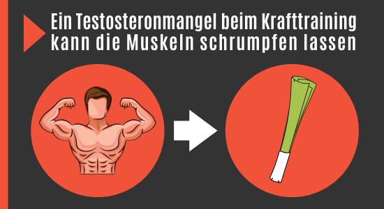 Testosteronmangel führt zu Muskelschwund