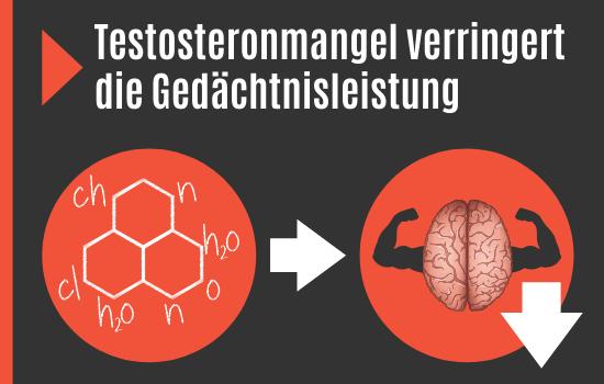 Testosteronmangel reduziert Gedächtnisleistung