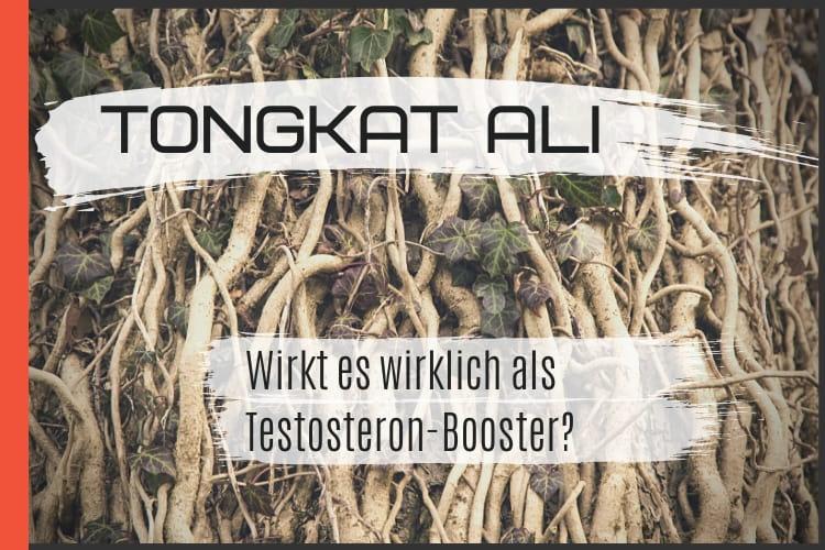 Tongkat Ali - Wirkung, Dosierung und Erfahrung mit Testosteron