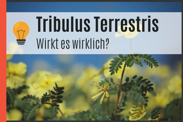 Tribulus Terrestris Wirkung