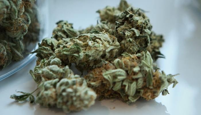 Cannabis - Marihuana