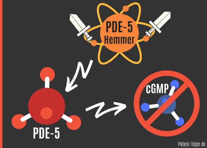 PDE-5-Hemmer Wirkung gegen PDE-5