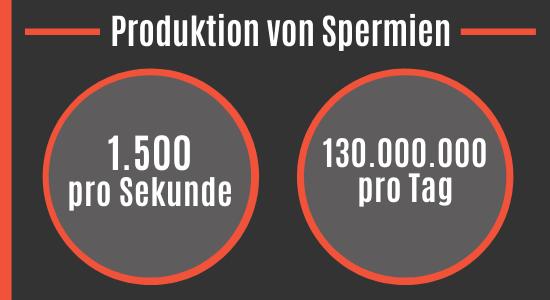 Tägliche Spermienproduktion