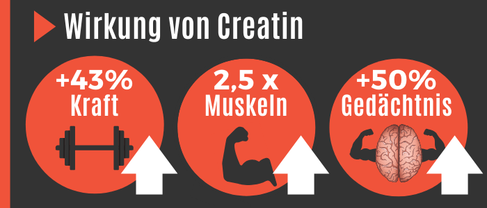 Wirkung von Creatin