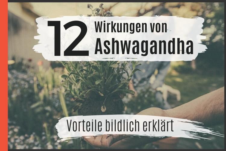 12 Wirkungen von Ashwagandha - Vorteile bildlich erklärt