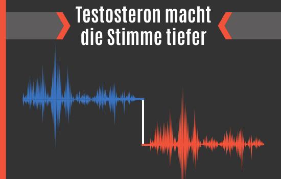 Testosteron macht die Stimme tiefer
