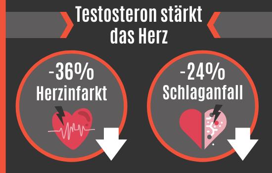 Testosteron stärkt das Herz