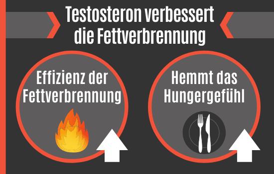 Testosteron verbessert die Fettverbrennung