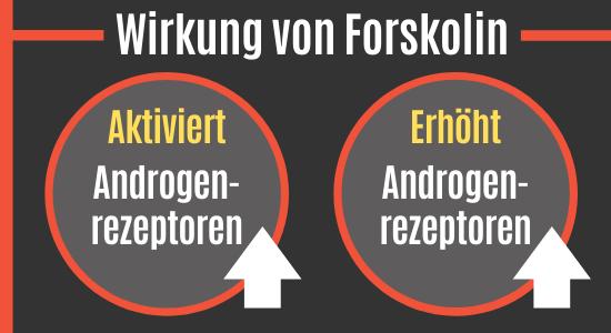 Forskolin steigert die Androgenrezeptoren