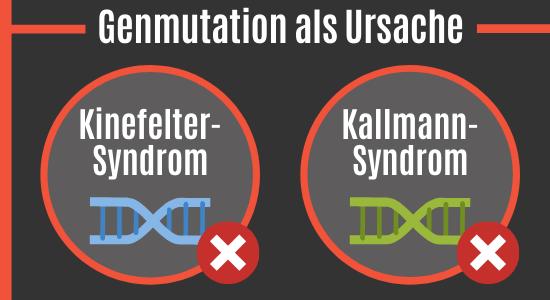Genmutation als Ursache eines Mikropenis