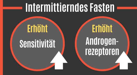 Intermittierendes Fasten vs. Androgenrezeptoren