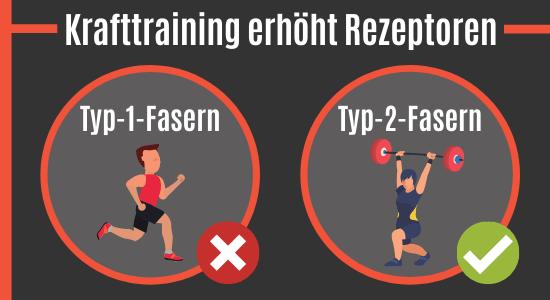 Krafttraining erhöht die Testosteron-Rezeptoren