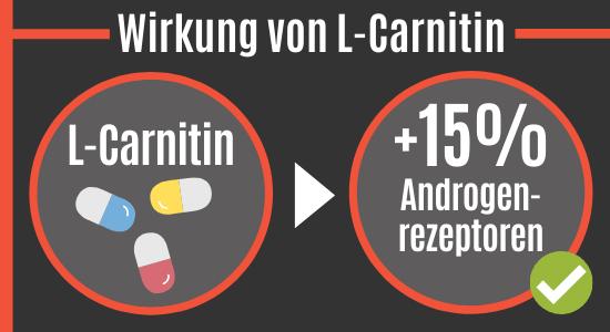 L-Carnitin erhöht die Androgenrezeptoren