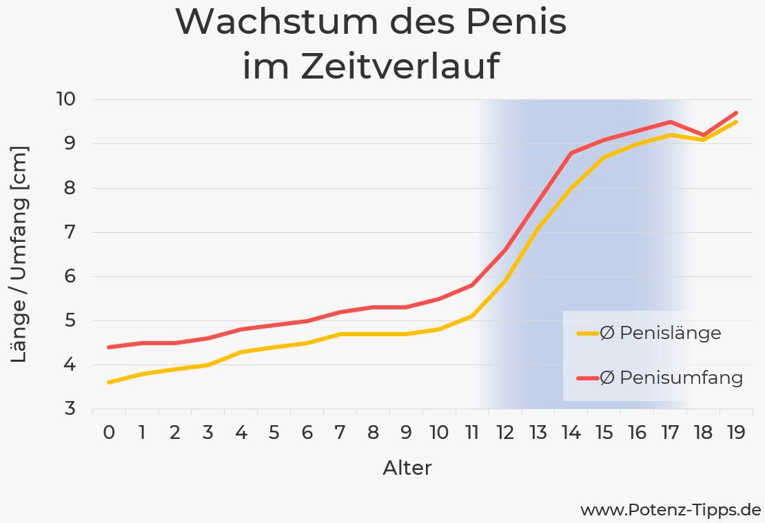 Wachstum des Penis nach Alter