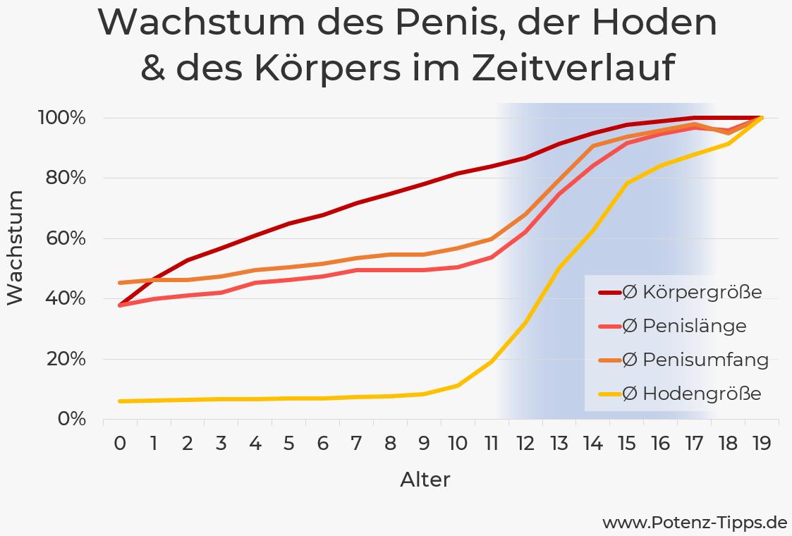Wachstum des Penis und der Hoden