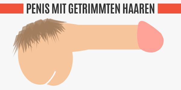 Penis mit getrimmten Haaren