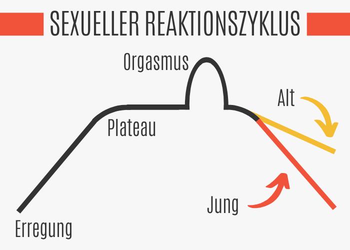 Sexueller Reaktionszyklus