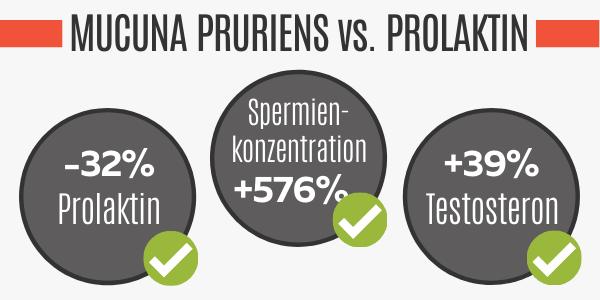 Mucuna Pruriens senkt das Prolaktin