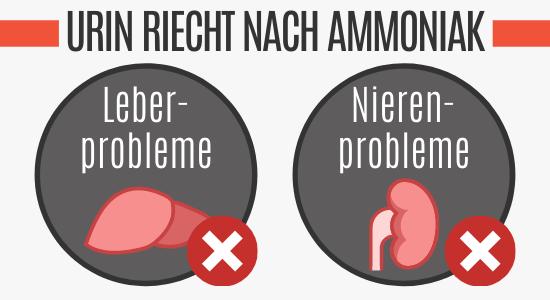 Nieren- und Leberprobleme führen zu Ammoniak-Geruch im Urin