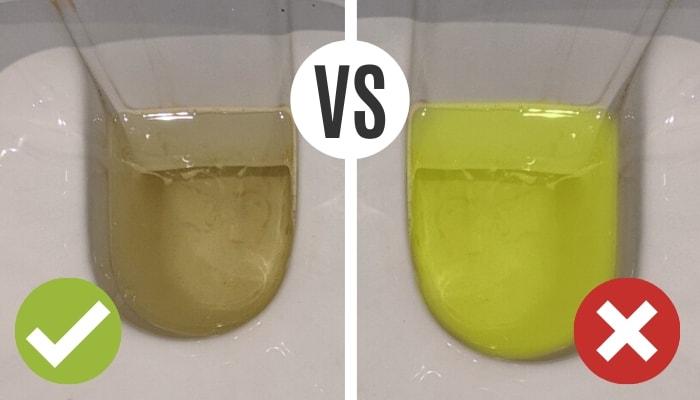 Normaler Urin vs. Neongelber Urin