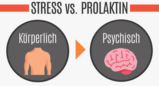 Stress führt zu erhöhtem Prolaktinspiegel