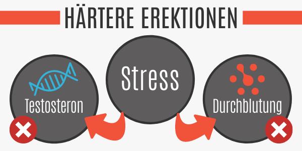 Stress senkt das Testosteron und die Durchblutung