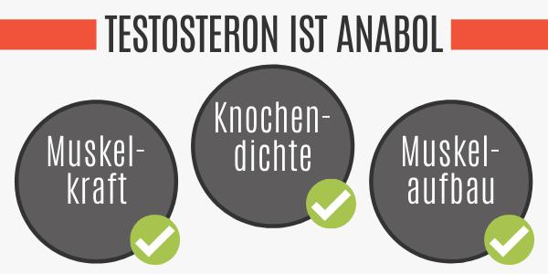 Testosteron ist anabol
