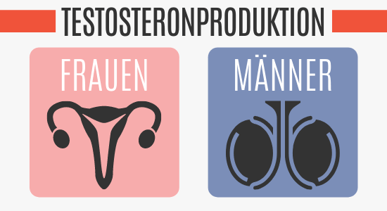 Testosteronproduktion bei Frauen und Männer