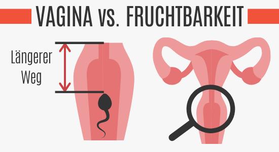 Vaginale Tiefe vs. Fruchtbarkeit