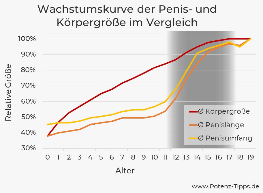 Wachstumskurve der Penisgröße und Körpergröße im Vergleich