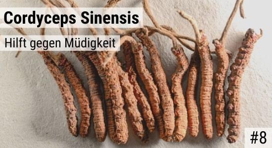 Cordyceps Sinensis hilft gegen Müdigkeit