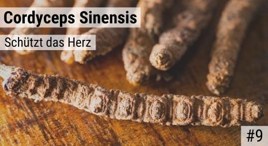 Cordyceps Sinensis schützt das Herz