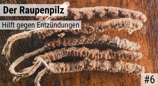 Der Raupenpilz hilft gegen Entzündungen