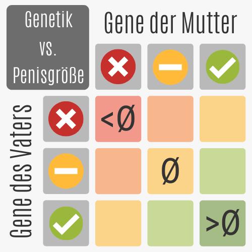 Genetik vs. Penisgröße