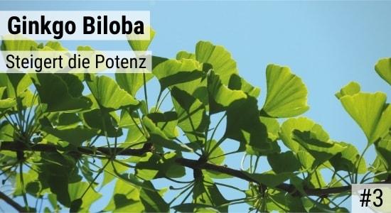 Ginkgo Biloba steigert die Potenz