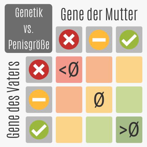 Penisgröße ist genetisch