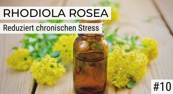 Rhodiola Rosea reduziert chronischen Stress