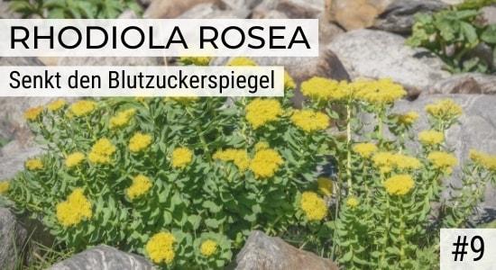 Rhodiola Rosea senkt den Blutzuckerspiegel