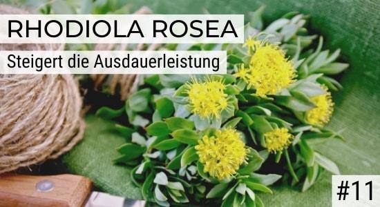 Rhodiola Rosea steigert die Ausdauerleistung