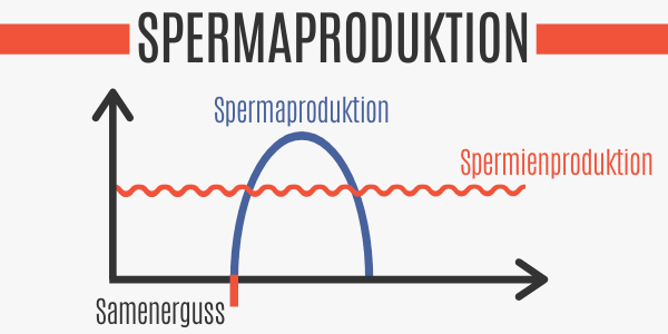 Spermaproduktion